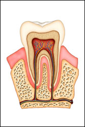 root canal therapy Abington PA - dentist